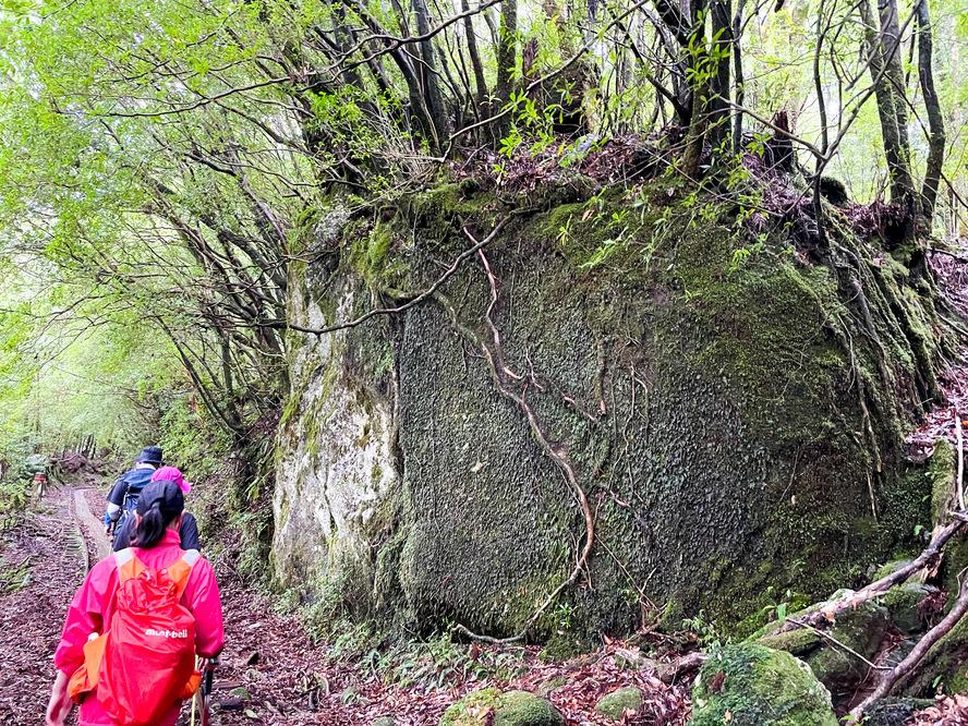 屋久島の植生_花崗岩と苔と土壌