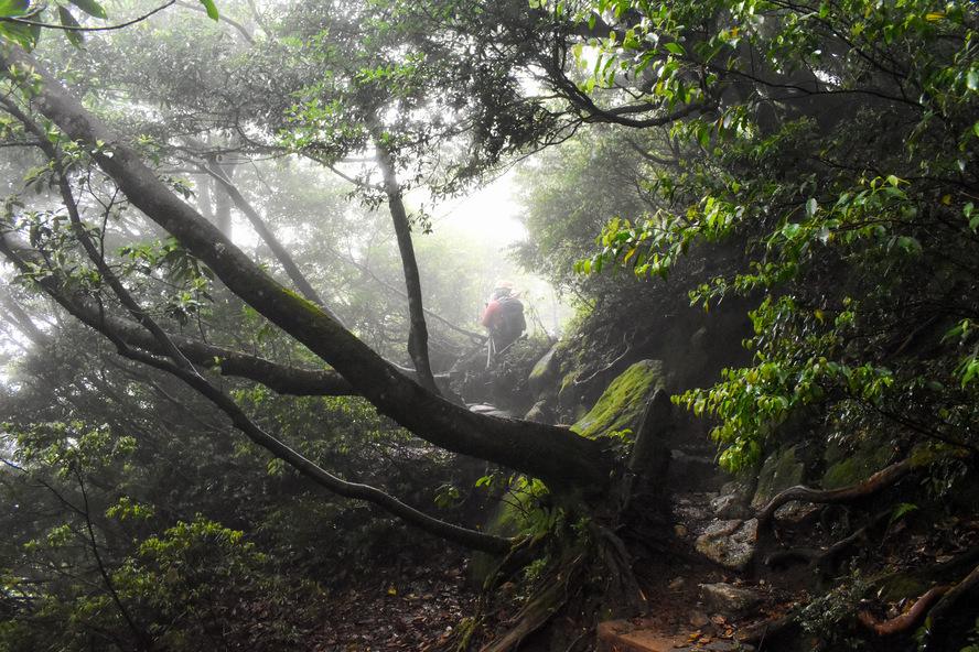 屋久島_縄文杉トレッキング_霧の中、もののけ姫の森を行く