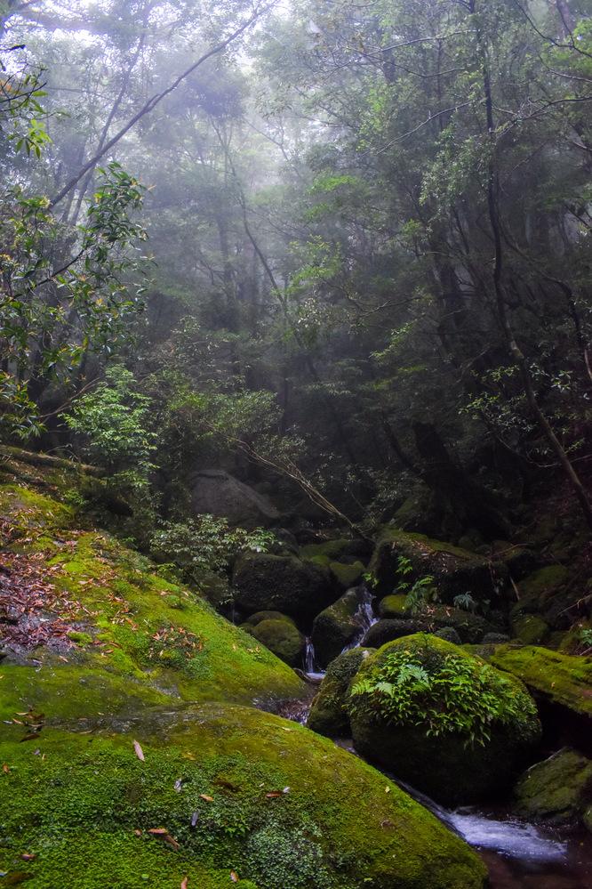 白谷雲水峡のコース_屋久島の観光案内