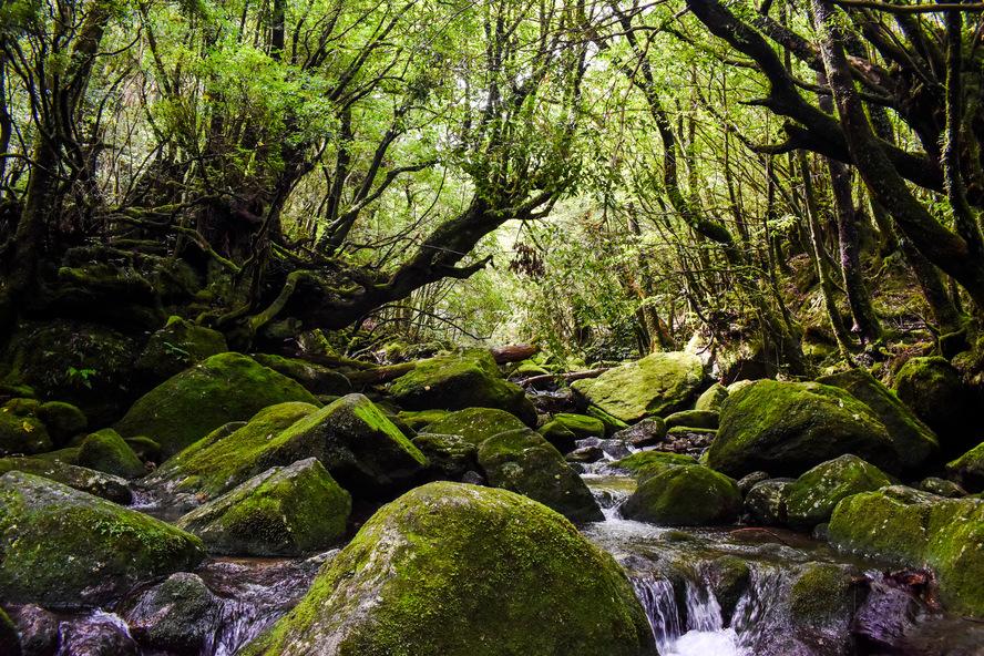 白谷雲水峡・もののけ姫の森_太鼓岩コース_屋久島観光のオススメ