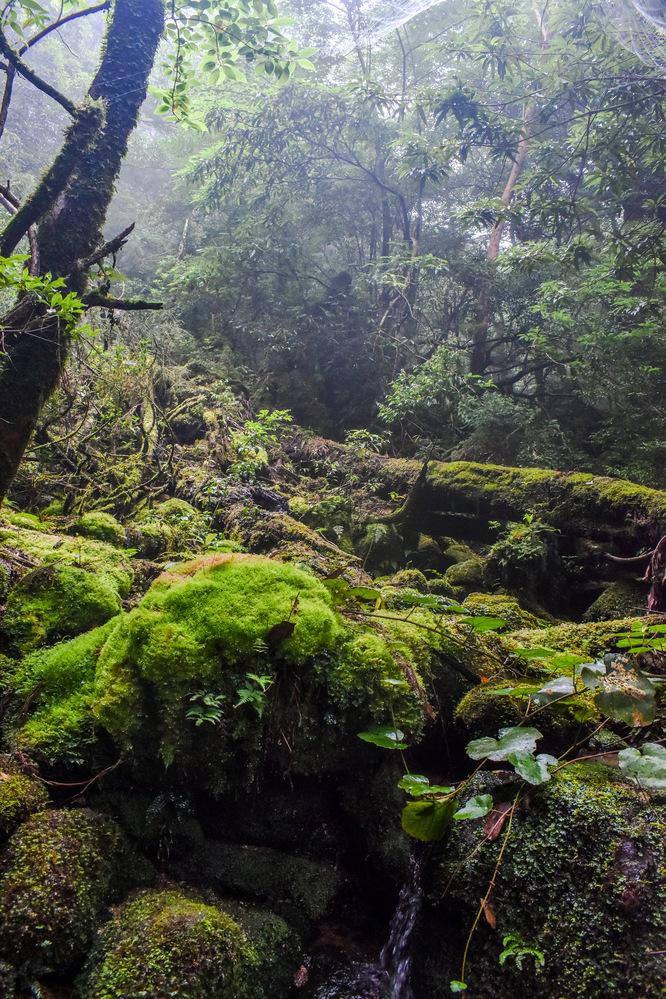 白谷雲水峡_もののけ姫の森と植生_屋久島観光