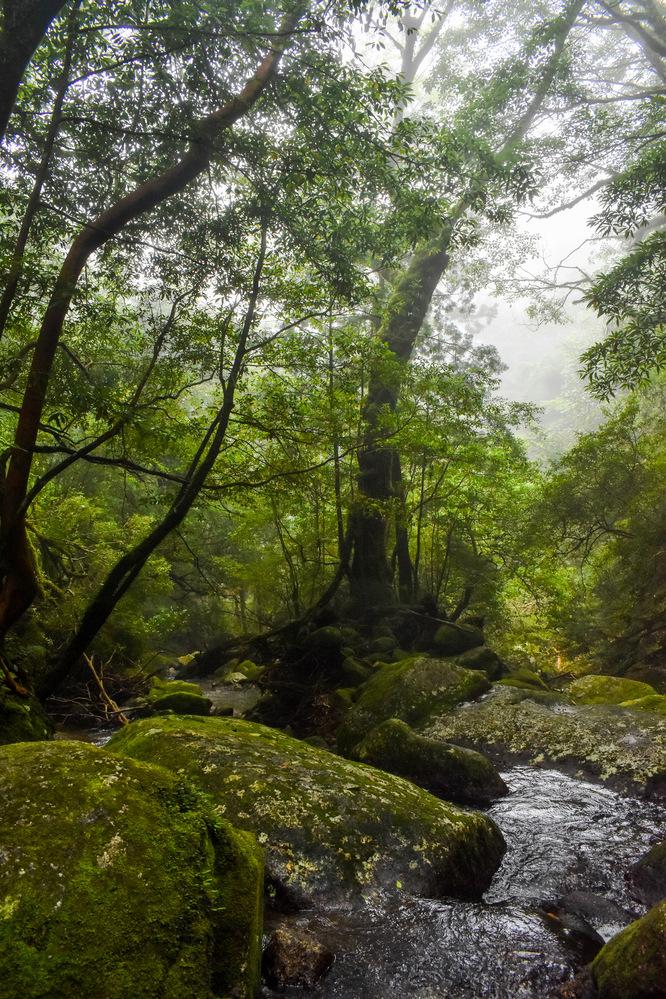 白谷雲水峡_もののけ姫の森と沢_ガイドなし屋久島観光のオススメ