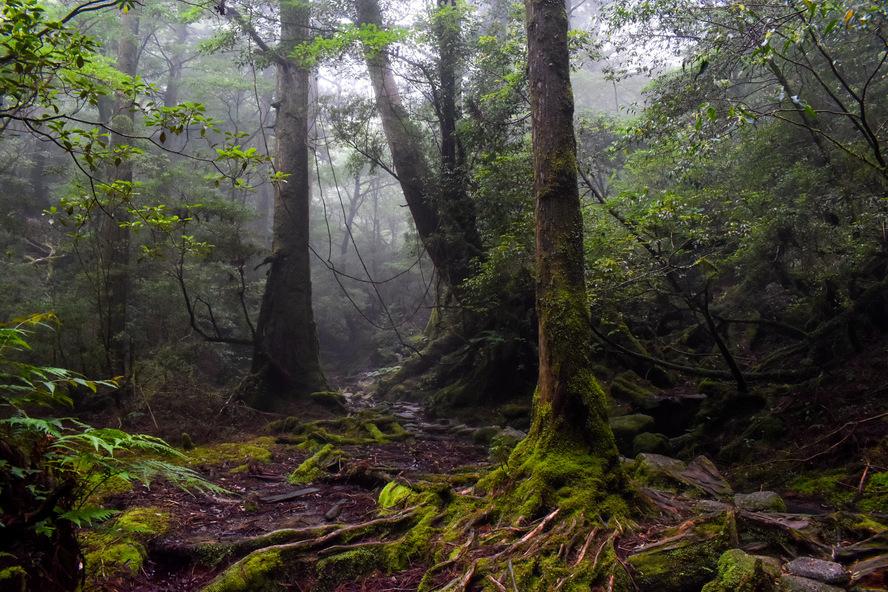 白谷雲水峡_もののけ姫の森と霧_ガイドなし屋久島観光のオススメ