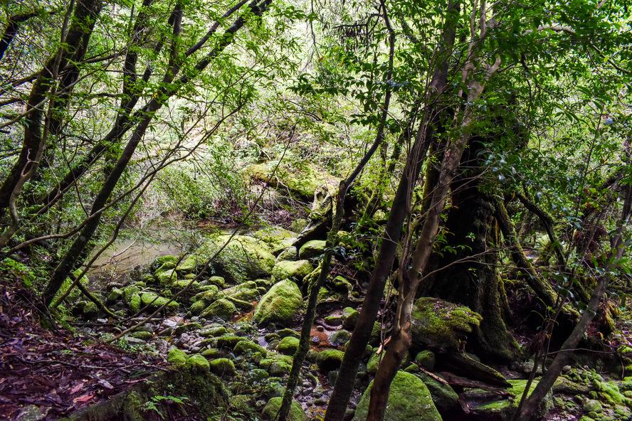 白谷雲水峡_もののけ姫の森の神秘_ガイドなし屋久島観光のオススメ