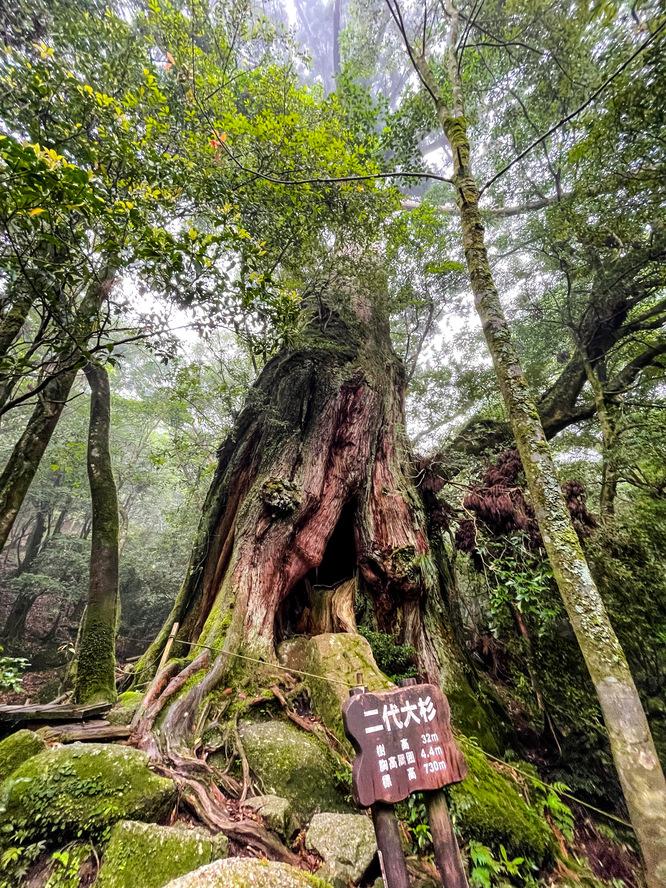 白谷雲水峡_二代大杉_もののけ姫の森_屋久島の見どころ