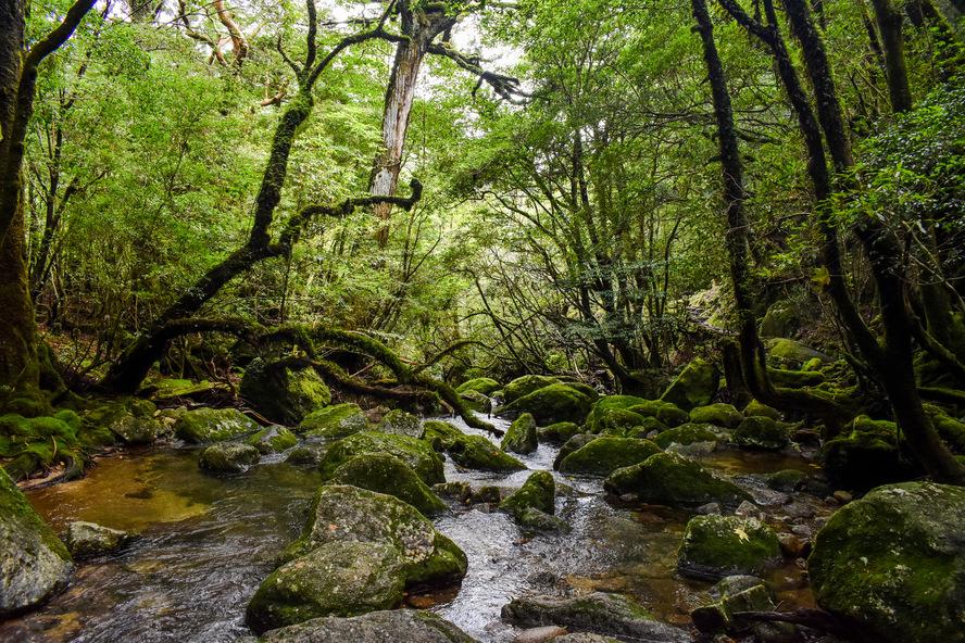 白谷雲水峡_太鼓岩コースの沢_もののけ姫の森ガイド