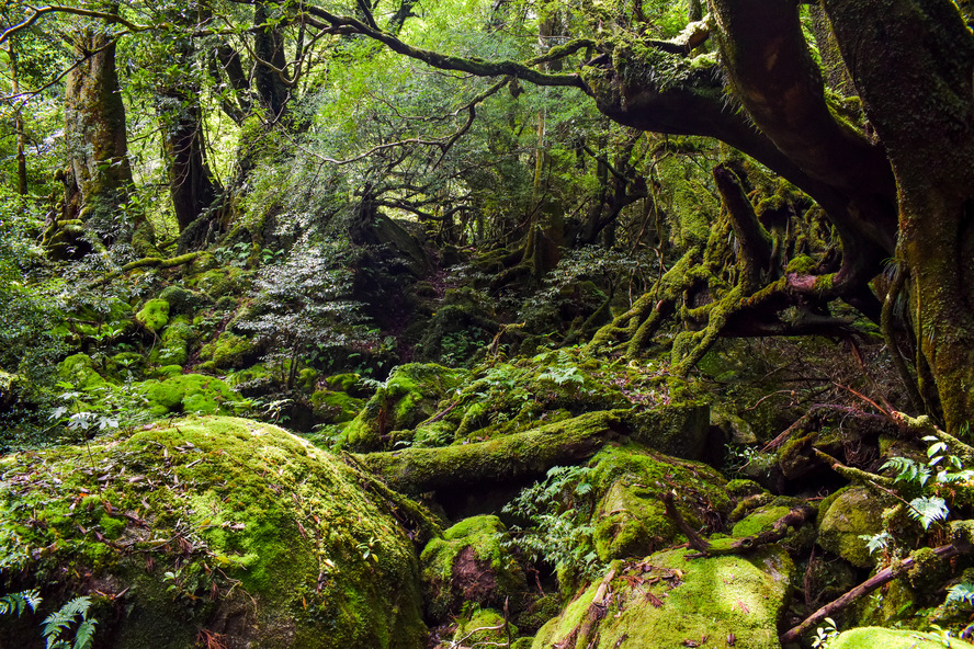 白谷雲水峡_晴わたる苔むす森_屋久島観光のオススメ