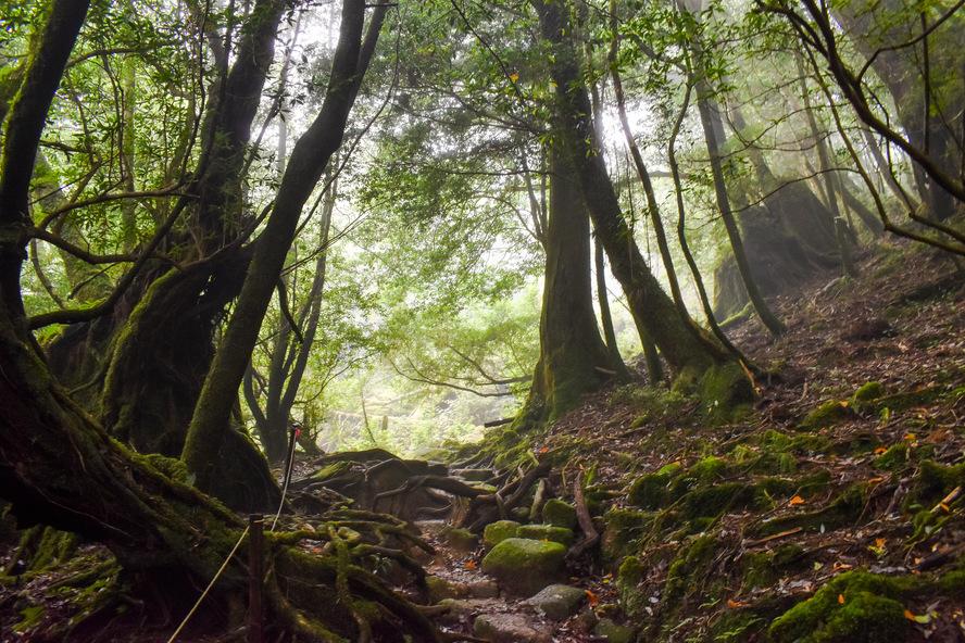 白谷雲水峡_苔むす森から太古岩_ガイドなし_屋久島案内