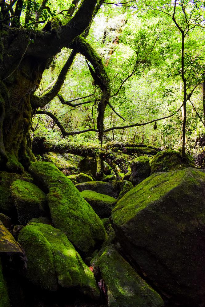 白谷雲水峡_苔むす森と岩と沢・もののけ姫の森_屋久島観光のオススメ