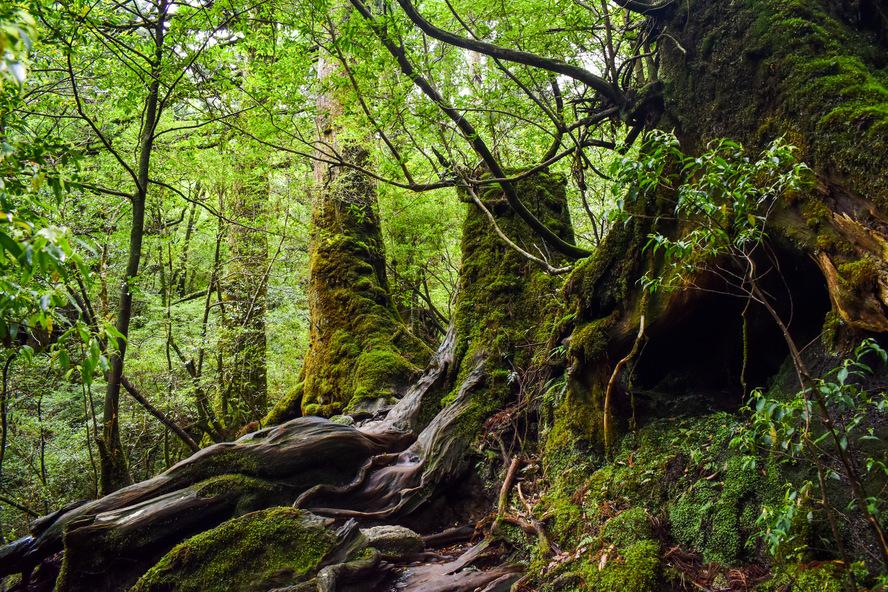 白谷雲水峡_苔むす森の道_もののけ姫の森_持ち物