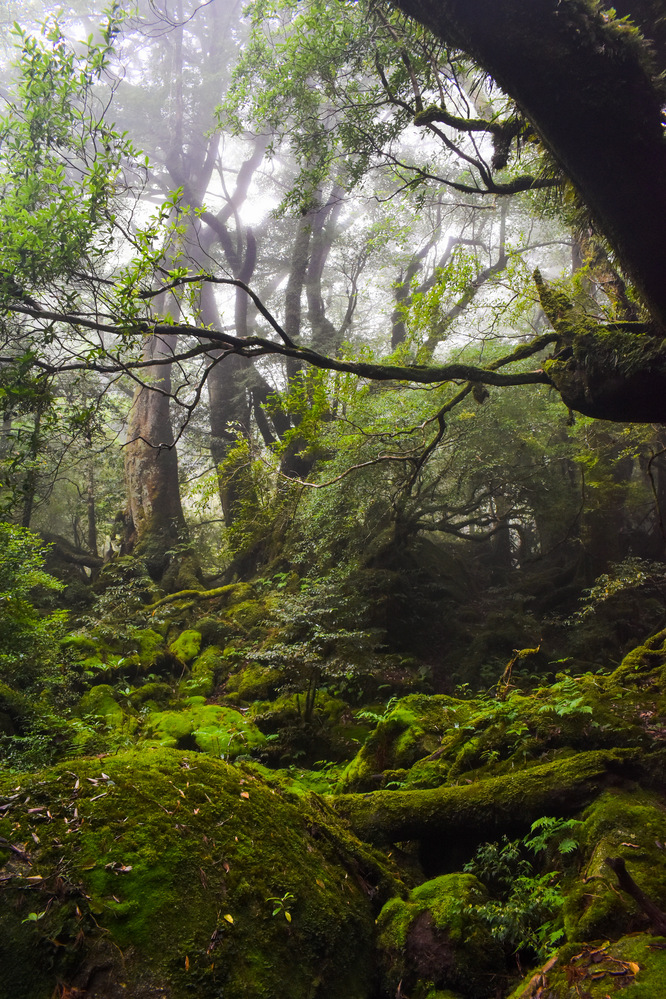 白谷雲水峡_霧がかる苔むす森_屋久島観光のオススメ