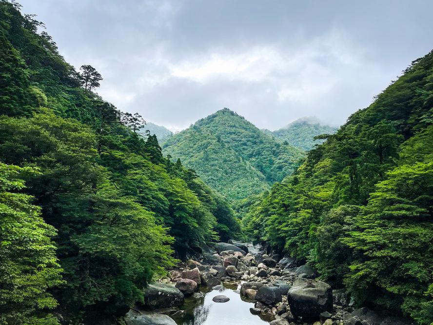 縄文杉トレッキング_屋久島の大自然_ガイドは必要か