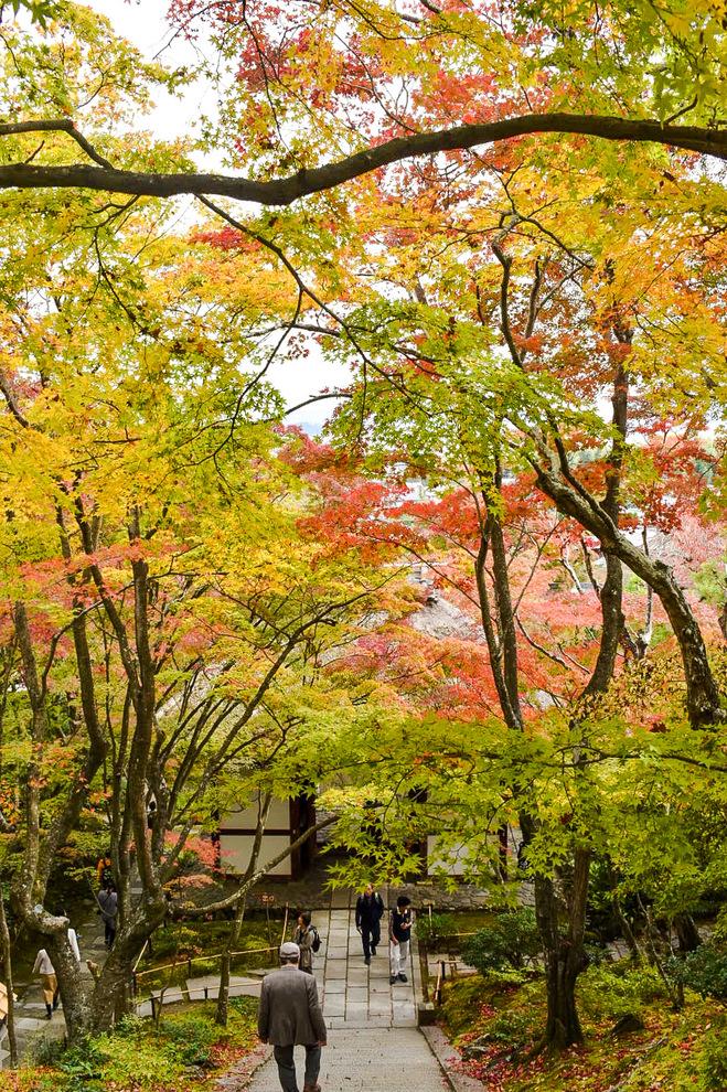 常寂光寺_仁王門と紅葉_秋の京都・嵐山