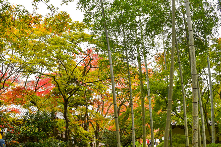常寂光寺_名前の由来_秋の京都・嵐山