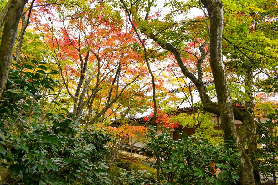 常寂光寺_木々と紅葉と本堂_秋の京都・嵐山