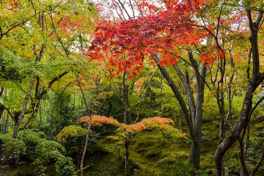常寂光寺_本堂前の紅葉_秋の京都・嵐山