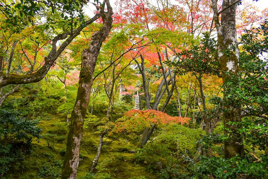 常寂光寺_紅葉と庭園_秋の京都・嵐山