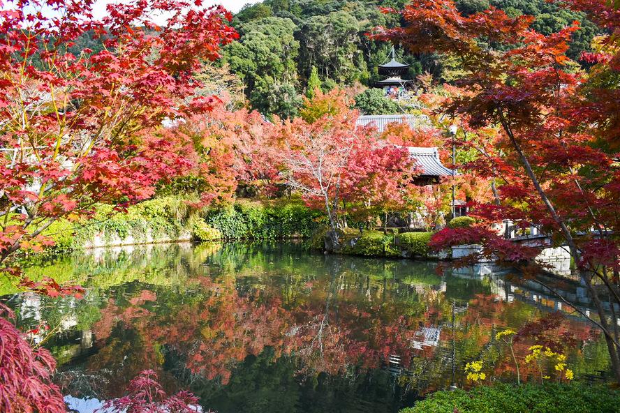 永観堂の見どころ_秋の紅葉と多宝塔