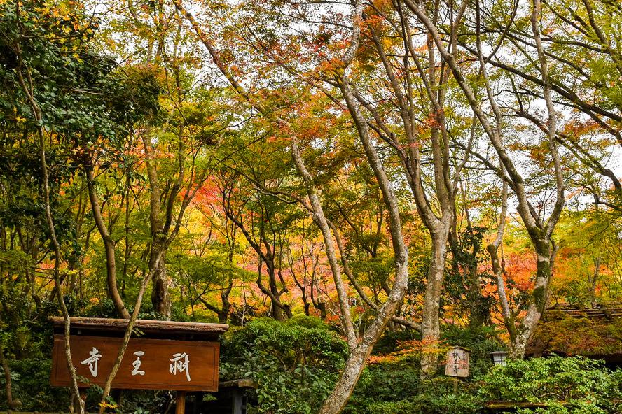 祇王寺の歴史_京都・嵐山の紅葉観光