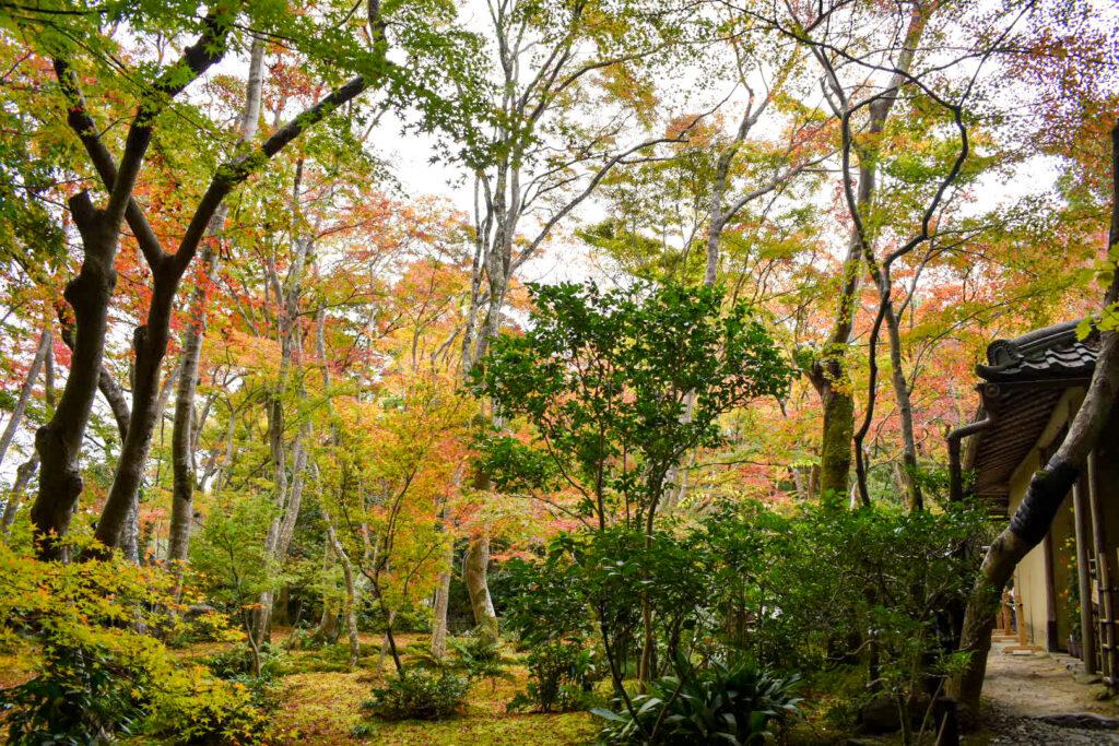 祇王寺の見どころ_秋の京都・嵐山の紅葉観光