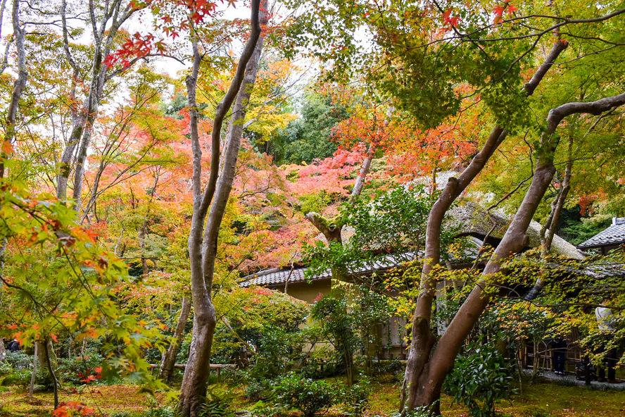 祇王寺の見どころ_草庵と紅葉_京都・嵐山観光