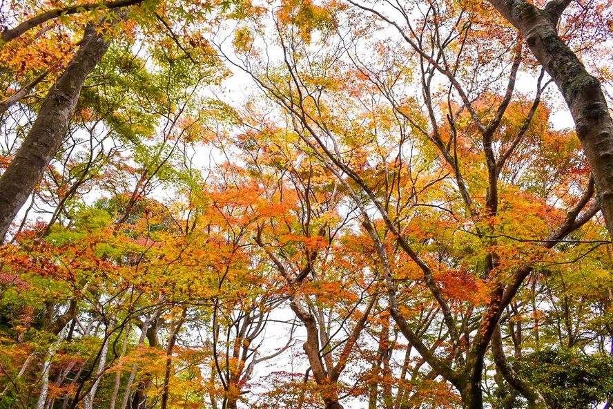 祇王寺の観光情報_秋の京都・嵐山旅行