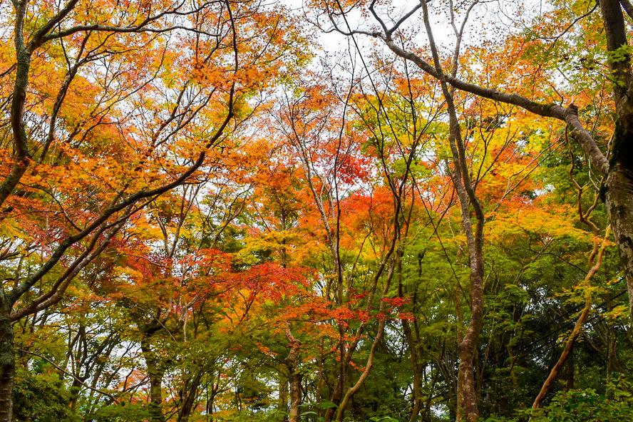 祇王寺の観光案内_秋の京都・嵐山旅行