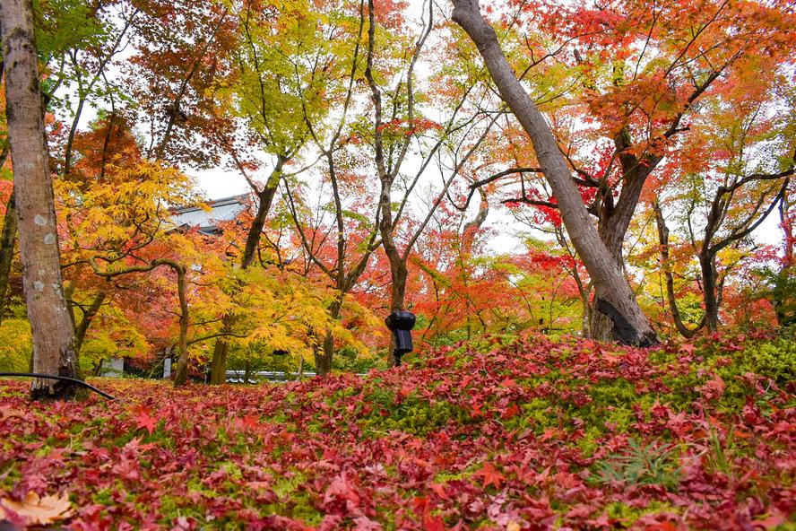 秋のもみじの永観堂_紅葉の見どころ_散り紅葉