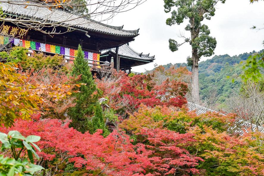 長谷寺・奈良の紅葉_本堂と懸造りと舞台
