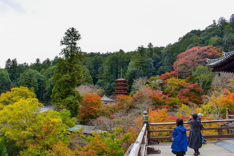 長谷寺・奈良_本殿からの秋の紅葉風景_舞台と五重塔