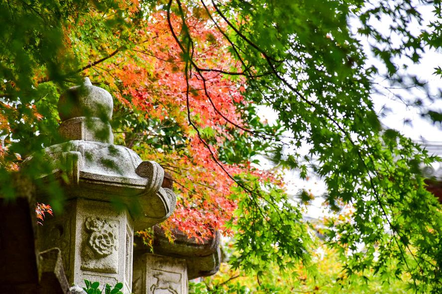 長谷寺・奈良_花の御寺の観光ガイド