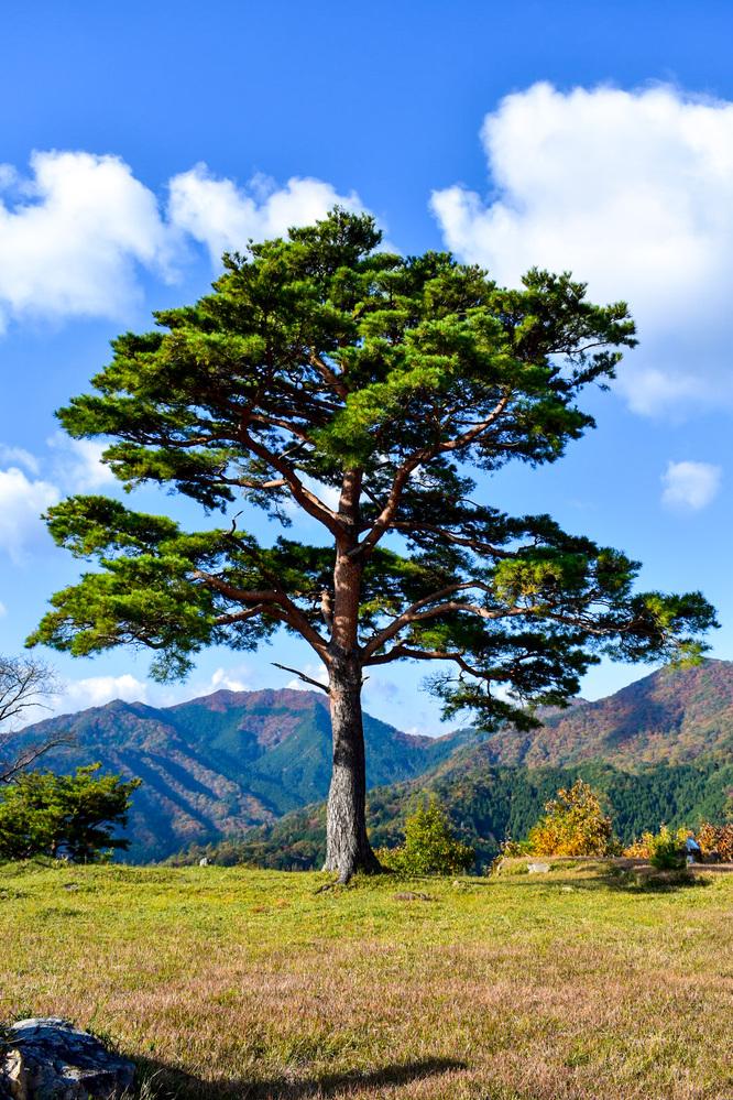 竹田城跡の見どころ_南千畳_天空の城と一本松